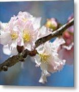 Cherry Blossoms On Blue Metal Print