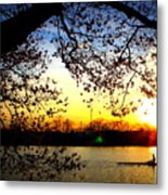 Cherry Blossoms On The Charles Metal Print
