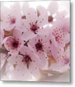 Cherry Blossoms Metal Print by Rod Sterling