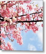 Cherry Blossoms Under Blue Sky Metal Print by Neconote