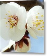 Apricot Flowers II Metal Print