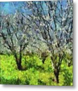 Cherry Orchard Metal Print