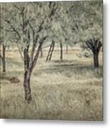 Cherry Orchard In Infrared Metal Print