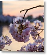 Cherry Pedals Metal Print