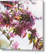 Cherry Tree Flowers Metal Print