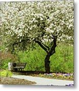 Cherry Tree In Full Bloom Metal Print
