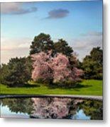 Cherry Tree Reflections Metal Print