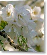 Cherryblossom Flowers 2 Metal Print