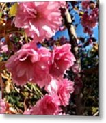 Cherryblossoms Perspective  Metal Print