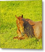 Chess Nut Horse Metal Print