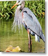 Chest Feathers Metal Print