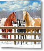 Chestnut Appaloosa Palomino Pinto Black Foal Horses In Snow Metal Print by Crista Forest
