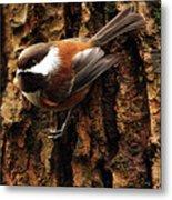 Chestnut-backed Chickadee On Tree Trunk Metal Print