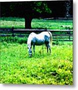 Chestnut Hill Horse Metal Print