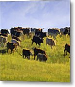Cheyenne Cattle Roundup Metal Print