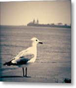 Chicago Seagull Metal Print
