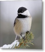Chickadee In The Snow Metal Print