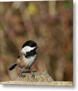 Chickadee On Wooden Fence Metal Print