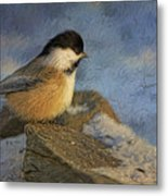 Chickadee Winter Perch Metal Print