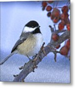 Chickadee With Craquelure Metal Print