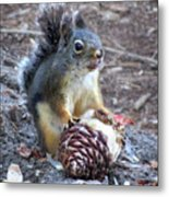 Chickaree Stripping A Pine Cone - John Muir Trail Metal Print