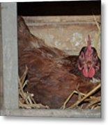 Chicken Box Metal Print