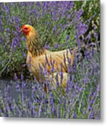 Chicken In The Lavender Metal Print