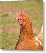 Chicken Strutting Metal Print