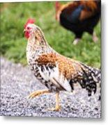 Chickens In Bird In Hand Metal Print