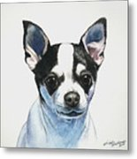 Chihuahua Black Spots With White Metal Print