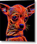 Chihuahua Dog Metal Print