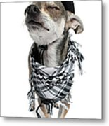 Chihuahua Wearing A Scarf And A Cowboy Hat Metal Print