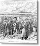 Chile: Wine Harvest, 1889 Metal Print