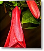 Chile's National Flower Copihue At Auto Museum In Moncopulli-chile  Metal Print