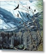 Chilkat River Eagles Metal Print