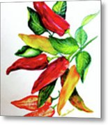 Chillies From My Garden Metal Print by Karin  Dawn Kelshall- Best