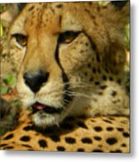 Chillin In The Afternoon Sun Metal Print