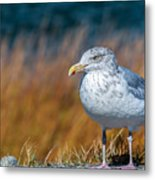 Chilling Seagull Metal Print