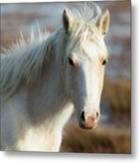 Chincoteague White Pony Metal Print