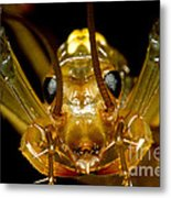 Chinese Cave House Centipede Metal Print