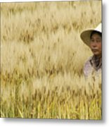 Chinese Rice Farmer Metal Print