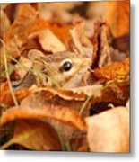 Chipmunk Among The Leaves Metal Print
