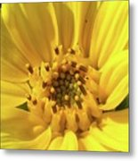 Chipmunk Planting - Sunflower Metal Print