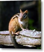 Chipmunk Portrait Metal Print