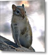 Chipmunk Up Close Metal Print