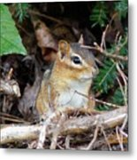 Chippy Metal Print