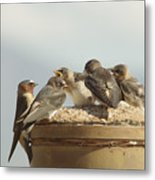 Chirping Swallows Metal Print