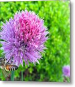 Chive And Bee Metal Print