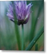 Chive Flower 2 Metal Print