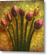 Chives Buds Metal Print